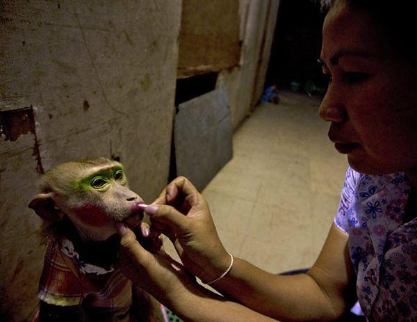 Monkey divadlo v Thajsku