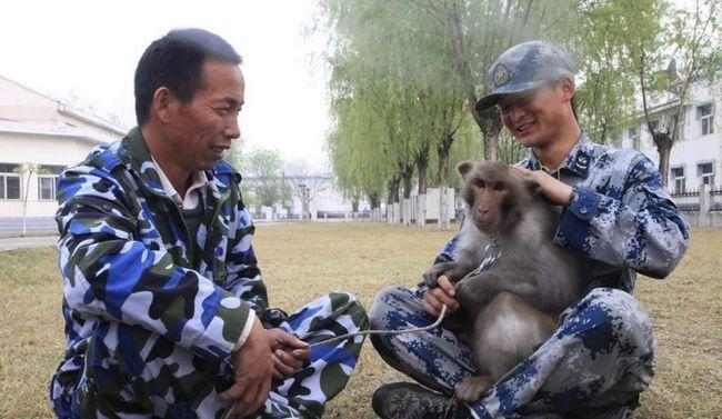 Air China přijímají makaků.