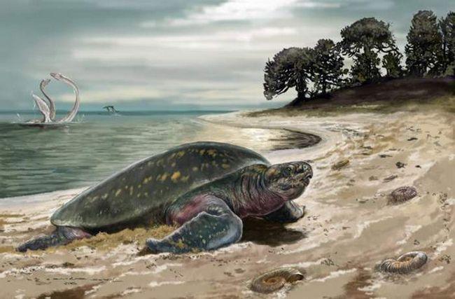 Ustanovljeno je najstariji morsku kornjaču.