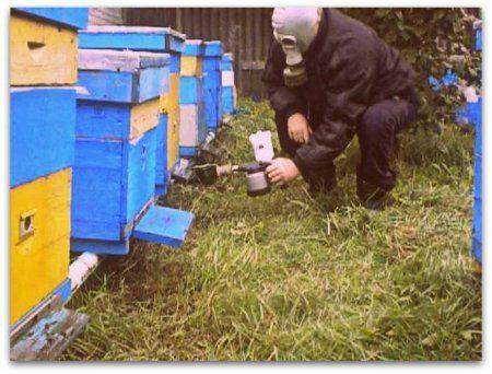 Spracovanie včely Bipin jeseň