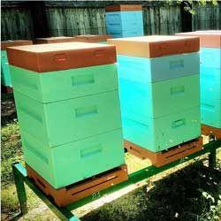 Общая характеристика, особенности конструкции и содержания пчел в улье нижегородец