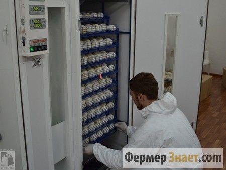 Загрузка яиц