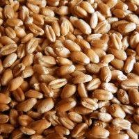 Přehled OTC ceny ukrajinský trh pšenice
