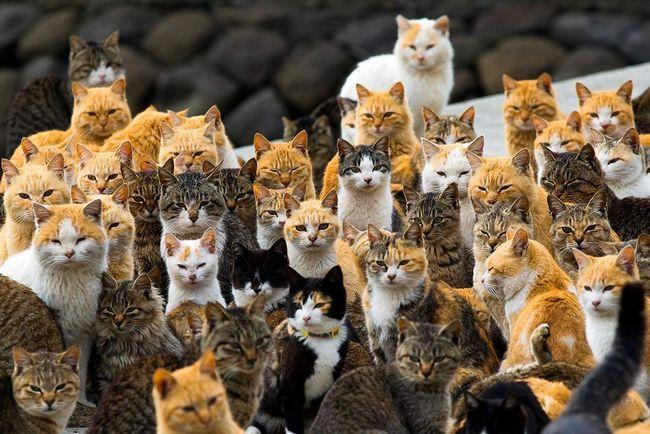 Очередной японский «остров кошек»