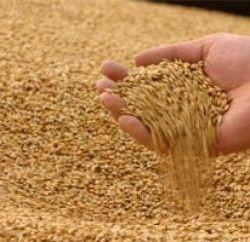 Очистка зерна