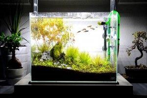 Оформление аквариума своими руками: грунт, коряги, акценты