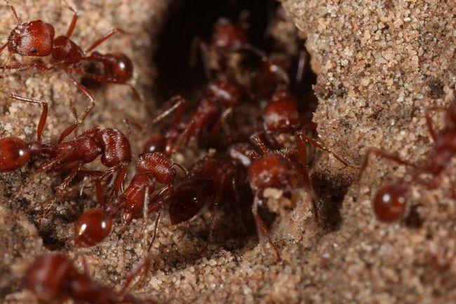 Sve, požar mravi vole ljudsko stanovanje za svoj život, nego grudi prirode.