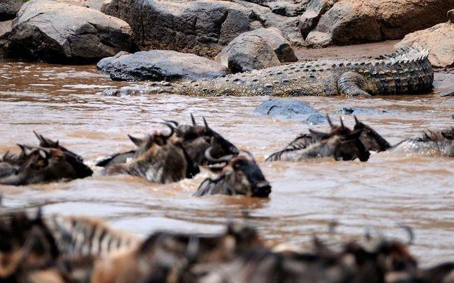 Nebezpečný přejezd řeky Mara