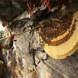 Описание и характеристика диких пчел, где они живут и как поймать