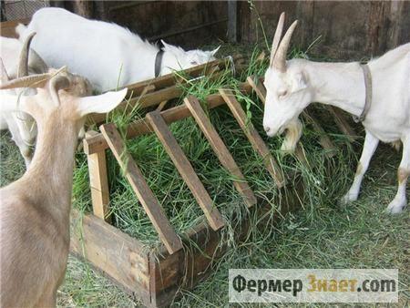 Domaći hranilice za koze