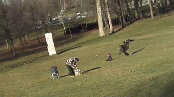 Орел пытался похитить маленького ребенка на глазах у родителей