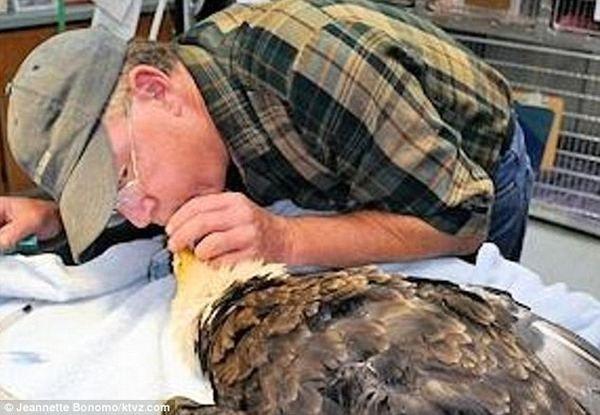 Veterinář ušetřila Dech orla bělohlavého