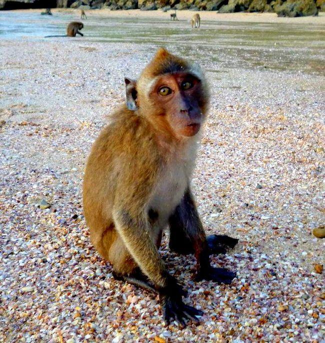 Monkey jezdit na toulavého psa.