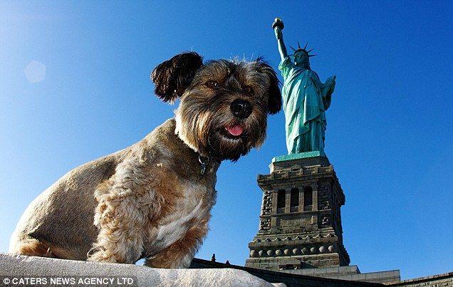 Oscar se dostal do New Yorku. Funny pes na pozadí Socha svobody
