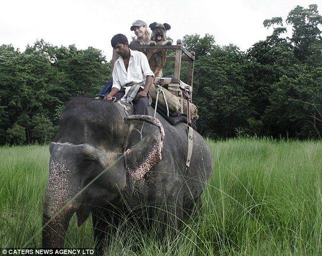 Cestovat Nepál: Oskara a jeho majitel Joanne Lefson jízdu na slonu