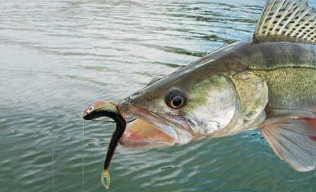 Оснастка дроп-шот для ловли рыбы