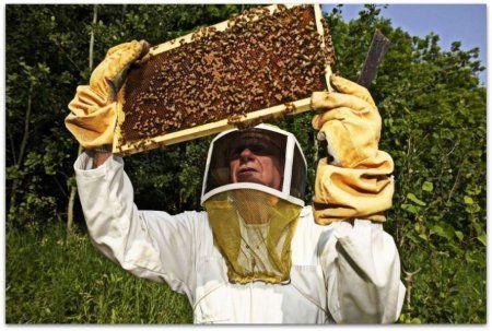 Osnovna pravila sadržaja pčela