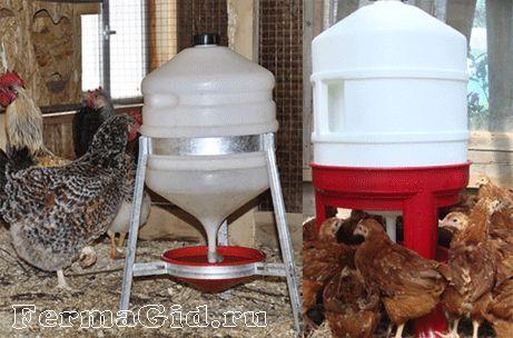 Principalele tipuri și cerințe pentru consumatorii de alcool pentru puii de găină, variantele lor de auto-producție