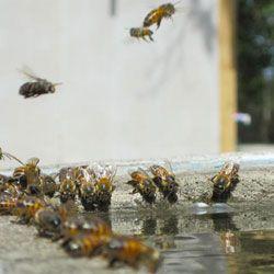 Основные виды и требования к поилкам для пчел, изготовление своими руками