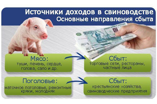 Свиноводство как бизнес- источники доходов