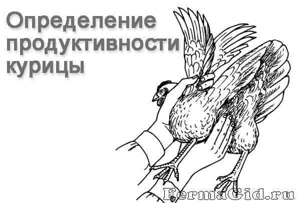 Основы содержания и ухода за курами несушками, требования к птичнику и инвентарю