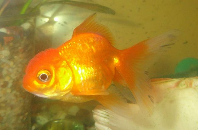 potrošnja kisika ribe ovisi o sezoni.