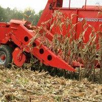 Особенности уборки кукурузы