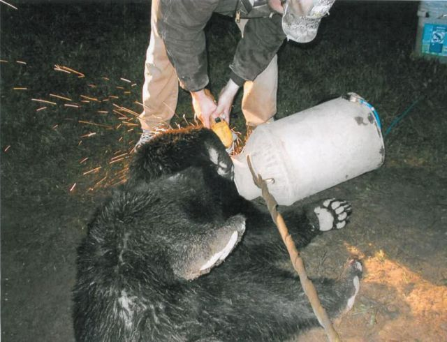 medvjed izuzeće