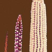 Izbor u uzgoju