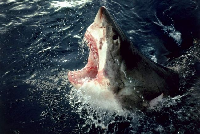 Австралийка пострадала от нападения акулы во время отдыха на Пхукете.
