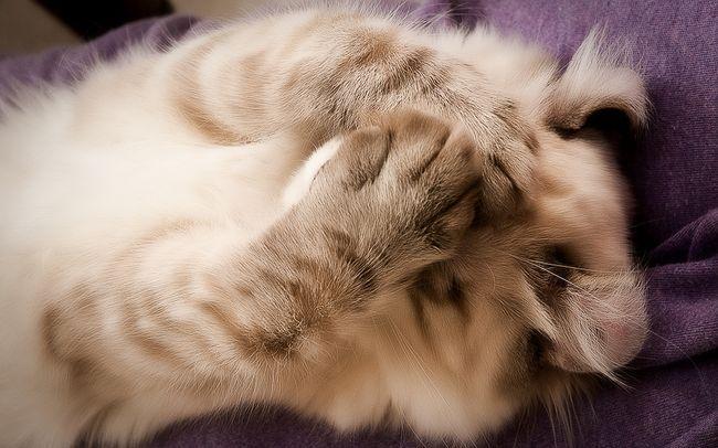 Отит у кошек - симптомы и лечение