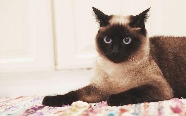 Отоферонол: инструкция по применению для кошек