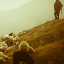 Овцеводство украины традиции
