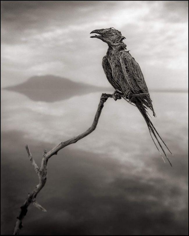 Koncentriranim alkalne tijelo čini ptice na kraju kamen.