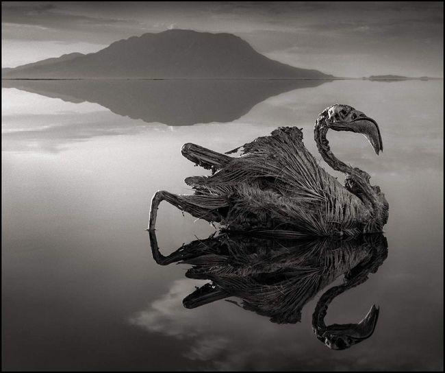 Fosili - impresivna i istovremeno zastrašujuće spektakl jezera Natron.