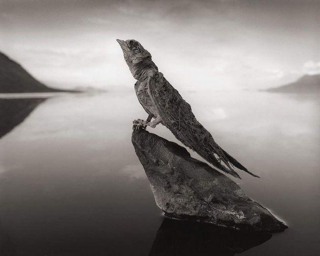 Jezera Natron u radovima Nick Brandt.