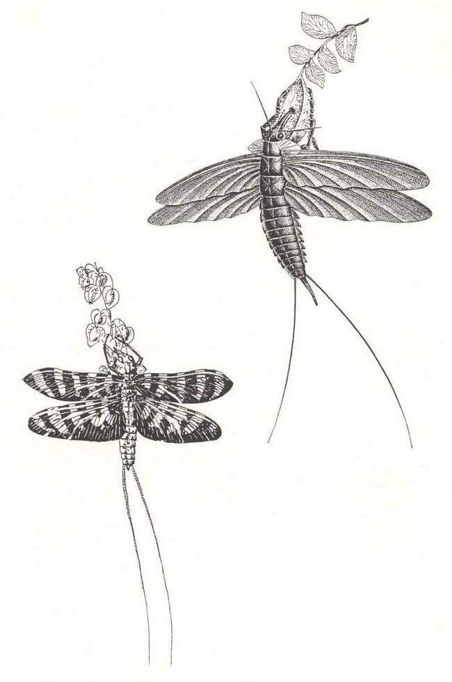 Paleodiktioptery boli väčšie ako aktuálna hmyzu.