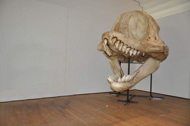 Dimenzije lobanje užasnuti. I šta zubi!