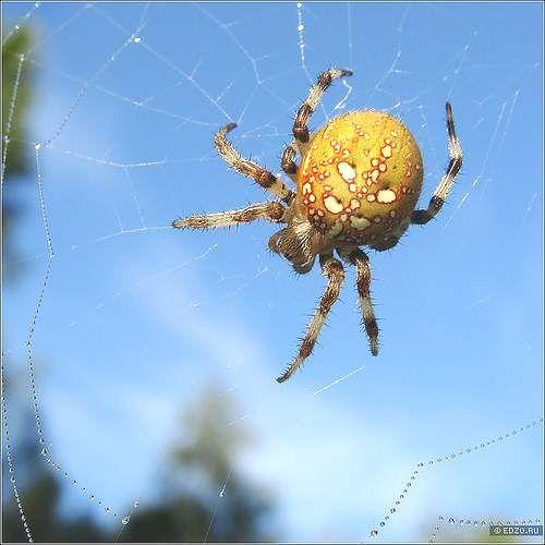 Spiders - prognostičari