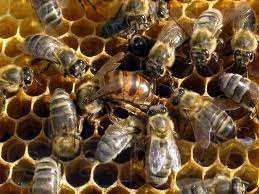 Пчеловодство подготовка к зиме (видео)