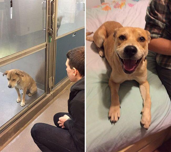 Pes z útulku: před a po pořízení rodiny