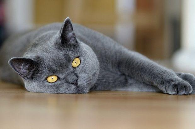 Ishrane i energetske potrebe mačaka