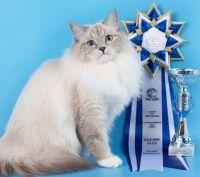 питомник маскарадных котов