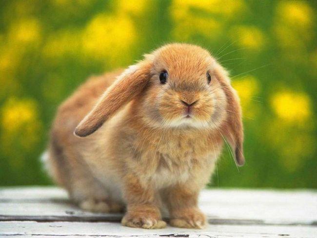 Péče pro králíky vyžaduje minimální investice a úsilí.