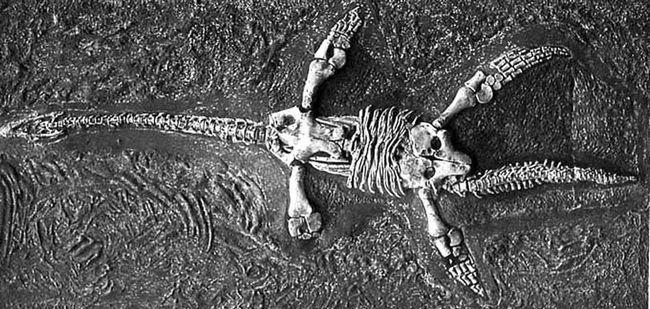 Fosili a plasiosaurusa ustvari