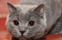 Zašto mačka gleda u oči