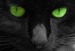 mačka gleda u oči