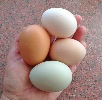 Malé vajcia, prečo