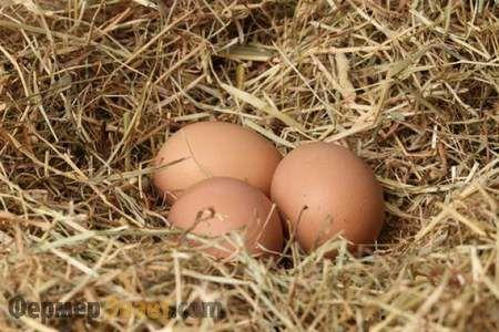 Slepačie vajcia v hniezde