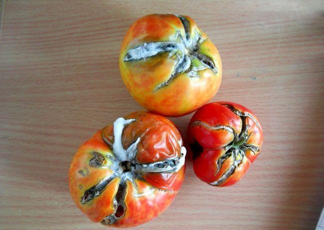 Zašto burst paradajz